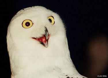 Orly Owl A Histria Da Coruja O RLY Sequelanet