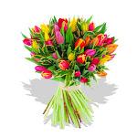 بحب الورود