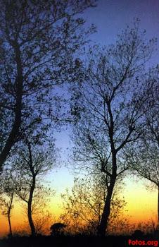 [..Bajo un árbol, vi atardecer & fui felíz..]