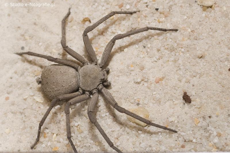 solo arañas :)