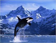 Baleines.