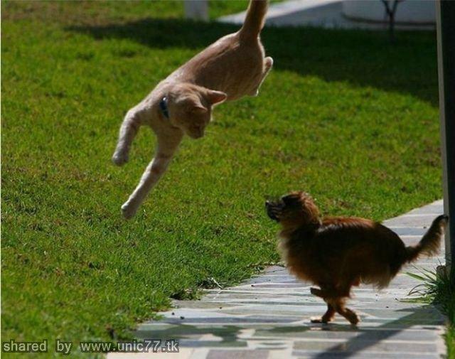 just_jumping_640_36.jpg (640×505)