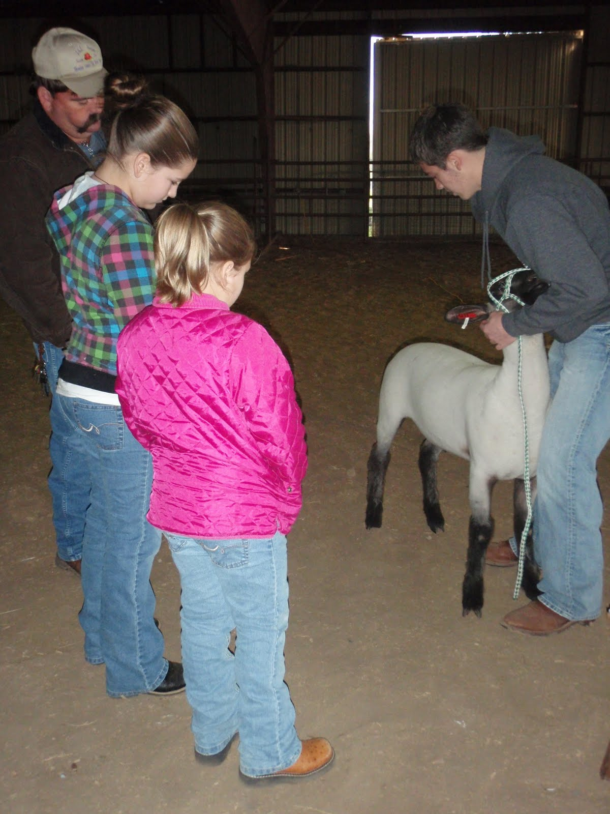 parish 4 h swine  sheep