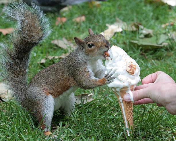 The New York Squirrel: Feed the Squirrels Project