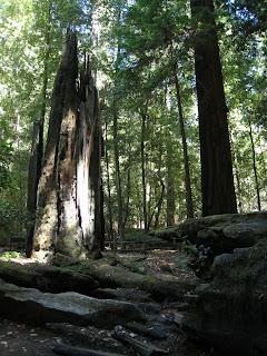 Portola紅木公園