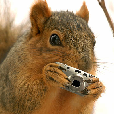 Squirrel_Shoots_Back.jpg