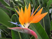 il mio fiore preferito
