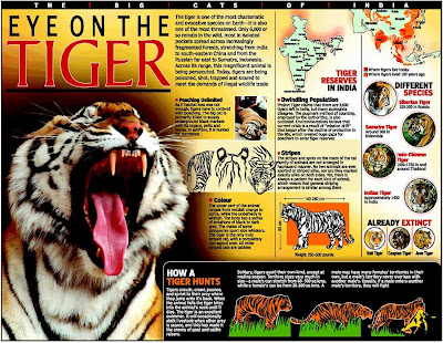 Only 1441 tigers in India