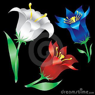 Flores hermosas de los lirios