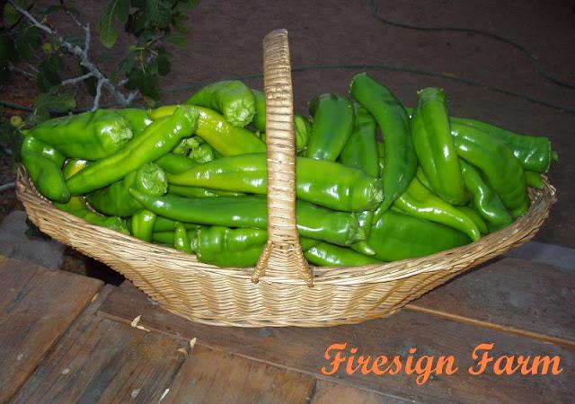 [chile+harvest+09.JPG]