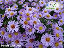 I fiori della nonna