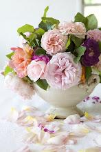 Rose antiche dai mille petali sfumati