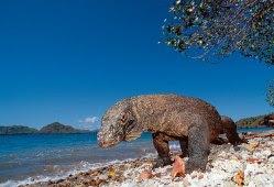 Komodo's Island