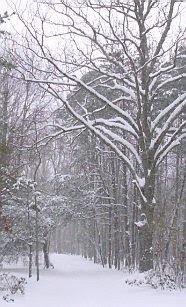 Snow January 2010 #1