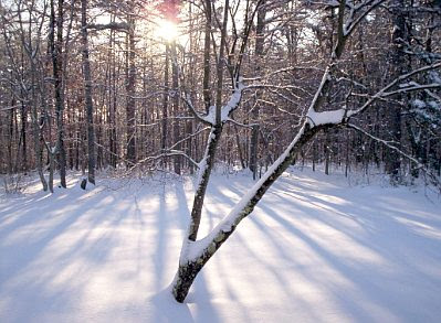 Snow January 2010 #7