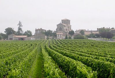 A vineyard in Bordeaux