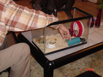 how to clean a hamster cage after one dies