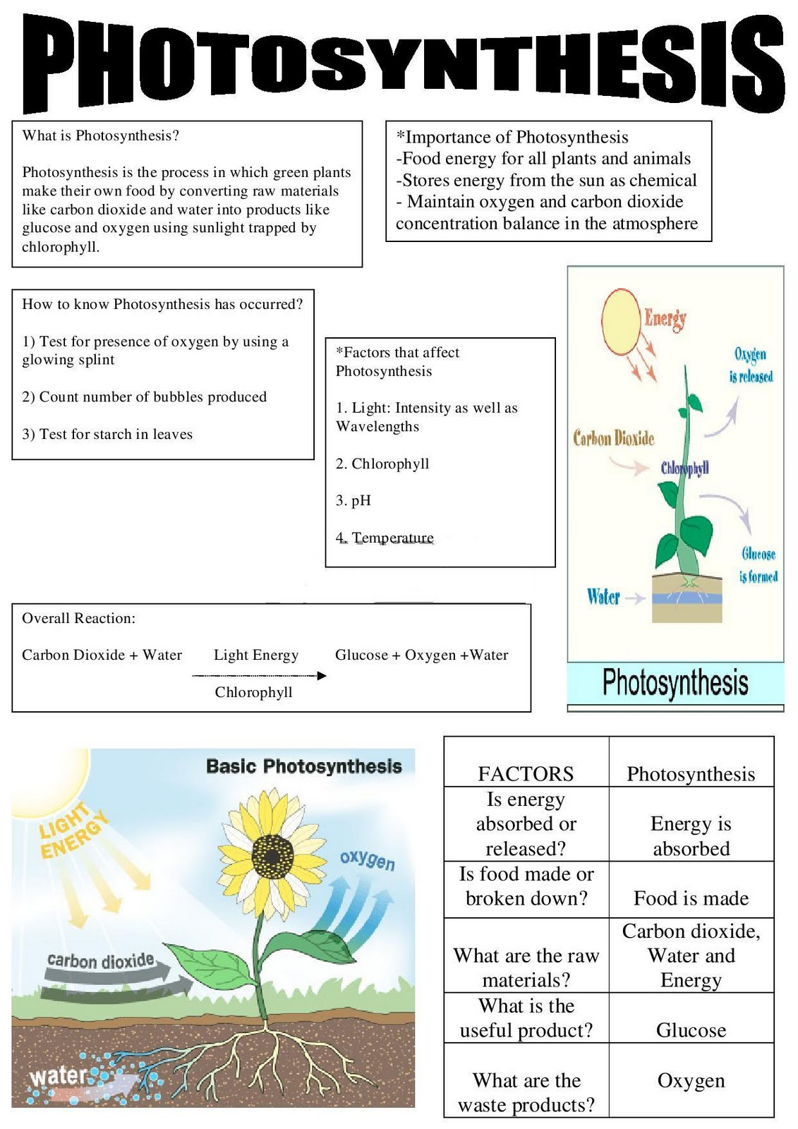 Photosynthesis diagram for kids: how plants help us to survive