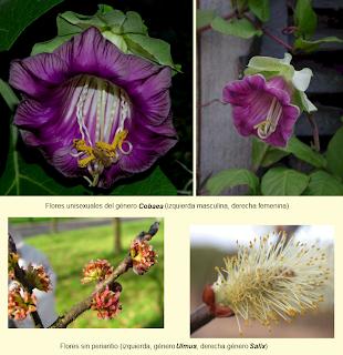 Reproduccion De Plantas Con Flores Biocienciasdesamuel