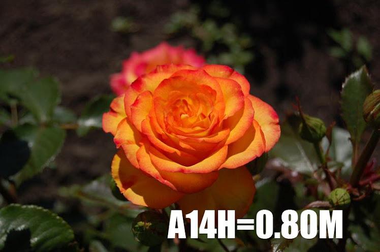 A14H=0
