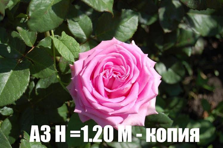 A3 H =1