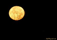 Full Moon Special