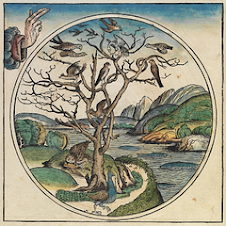 A Day of Creation from Nuremberg Chronicle