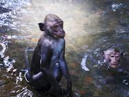Holy Monkey
