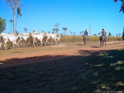 Ranchers in Mato Grosso
