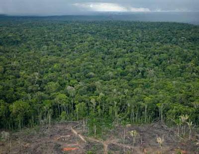 Dense canopy of trees in Brazil