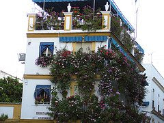 Hermoso balcón con flores en Sevilla