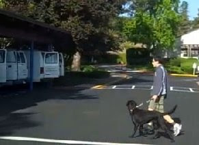 Instructor walks with a black Lab toward a training van
