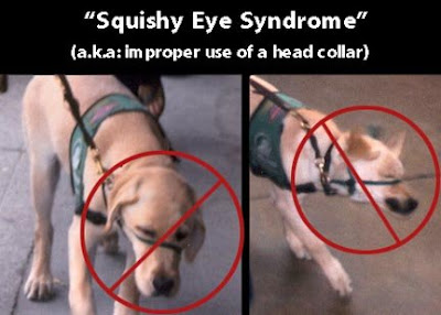 Examples of poor head collar use.