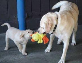 A puppy playing with its momma