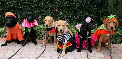 Lone Star pups in their Halloween costumes