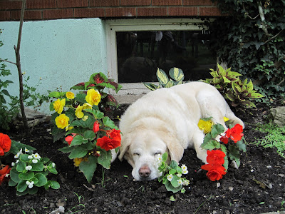 Nimh asleep among some flowers