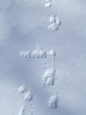 Here are some deer tracks that we saw on our walk.