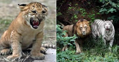 ovticartmy: 10 Amazing Hybrid Animals