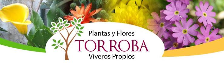 Plantas Y Flores Torroba