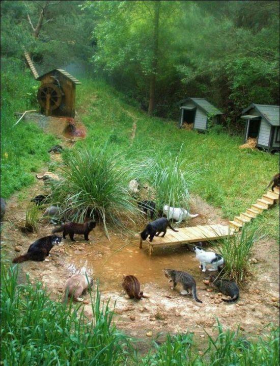http://1.bp.blogspot.com/_mmBw3uzPnJI/S-RJpvtwfpI/AAAAAAABOxk/_LGTMHoLku4/s1600/homeless_cats_42.jpg