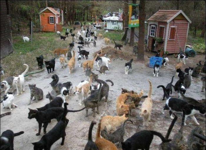 http://1.bp.blogspot.com/_mmBw3uzPnJI/S-RJrUBRLvI/AAAAAAABOx8/sGaAoRmQqB4/s1600/homeless_cats_39.jpg