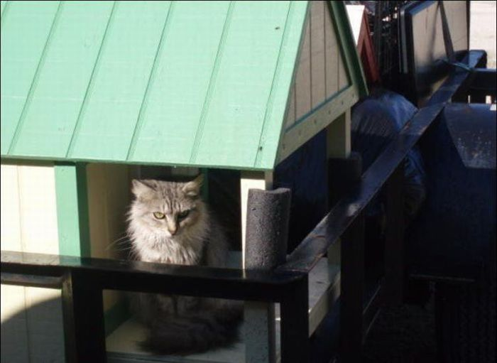 http://1.bp.blogspot.com/_mmBw3uzPnJI/S-RK7VO1AHI/AAAAAAABO0I/WgOHuoTp6ss/s1600/homeless_cats_25.jpg