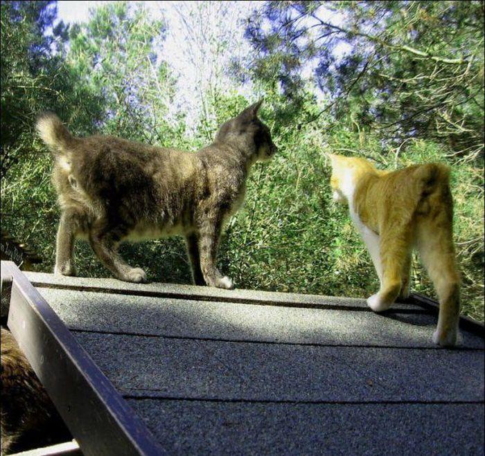 http://1.bp.blogspot.com/_mmBw3uzPnJI/S-RKo1_7wYI/AAAAAAABOzg/W9ZtUSH2aqk/s1600/homeless_cats_30.jpg