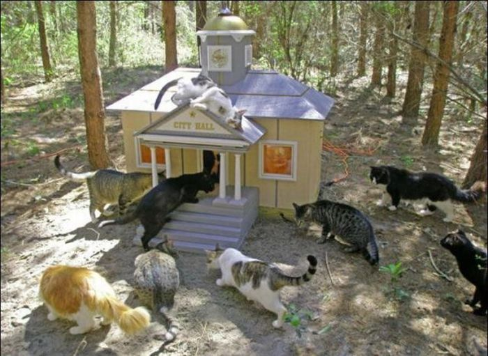 http://1.bp.blogspot.com/_mmBw3uzPnJI/S-RLNh14cgI/AAAAAAABO1I/VIpAGC3uS9I/s1600/homeless_cats_17.jpg
