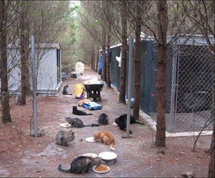 http://1.bp.blogspot.com/_mmBw3uzPnJI/S-RLo7yXgvI/AAAAAAABO2g/zxRoXwPpFnY/s1600/homeless_cats_06.jpg