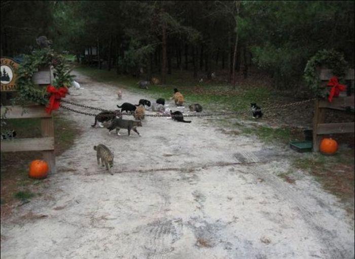 http://1.bp.blogspot.com/_mmBw3uzPnJI/S-RLpLz2YYI/AAAAAAABO2o/J32X5A7FEuQ/s1600/homeless_cats_05.jpg