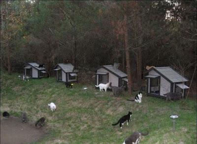 منزل جديد للقطط بلا مأوى