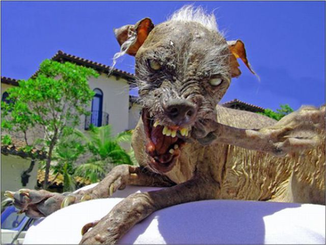 ugly dogs and cats. Ugliest Dogs Ever Seen
