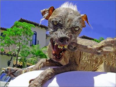 os cachoros mais feios do mundo