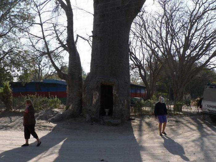 [tree_toilet_03.jpg]